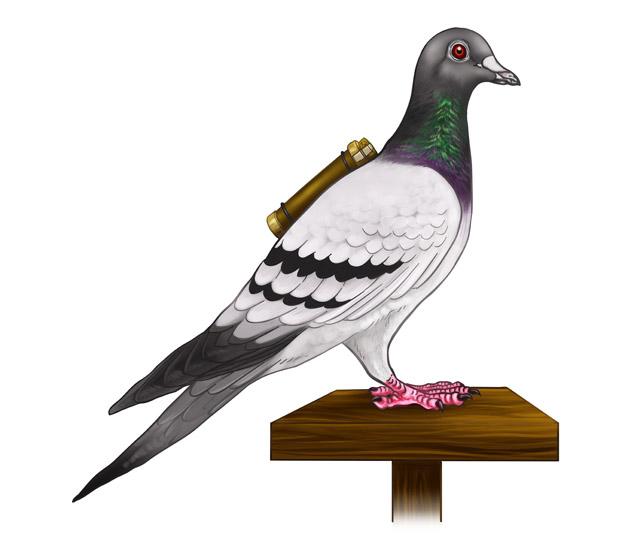 Homing pigeon - Wikipedia