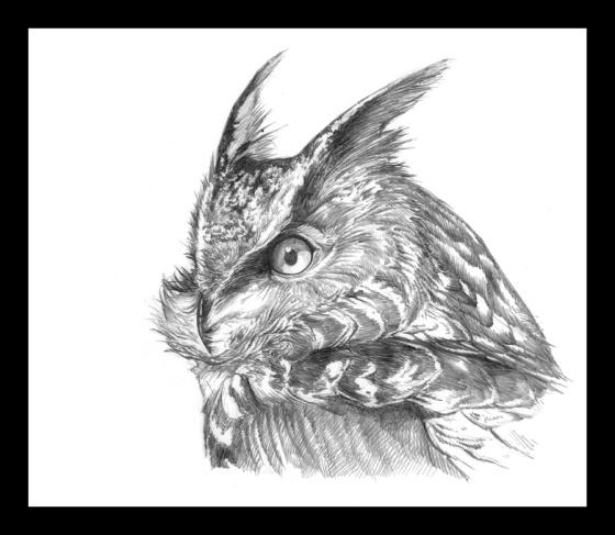 Digital Painting Illustration, Bird series - Eurasian-Eagle-owl