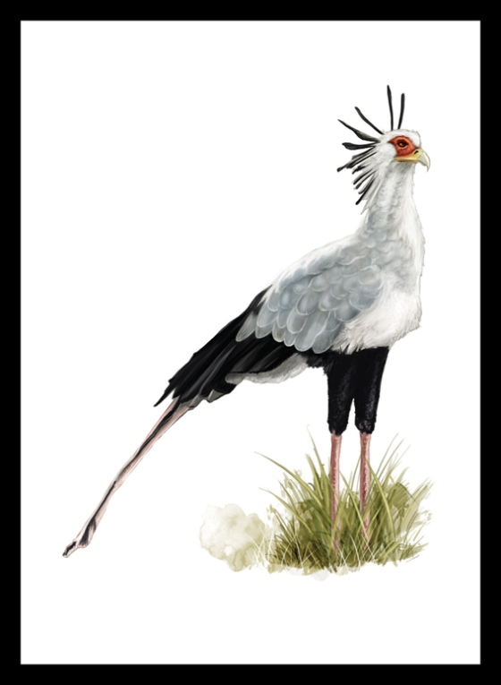 Digital Painting Illustration - Secretary Bird
