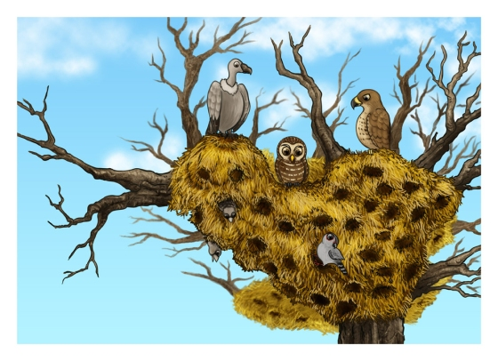 Cartoon Painting Illustration - Sociable Weaver Nest
