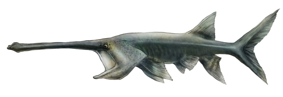 Chinese Paddlefish illusrtation