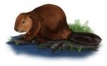 Beaver(low-res)