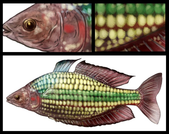 Tag Archives: Crimson Spotted Rainbowfish Eastern Rainbowfish