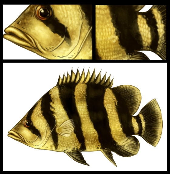 Siamese Tigerfish