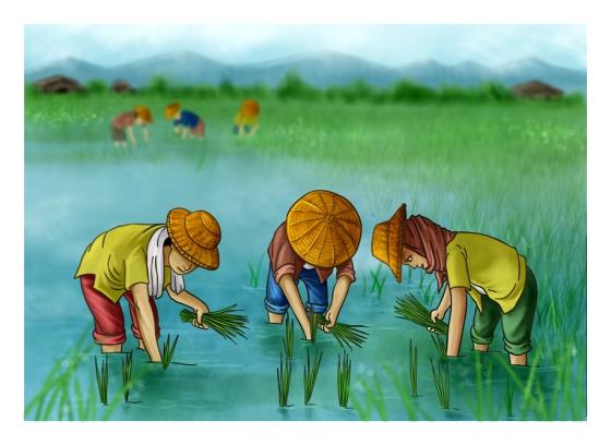 Planting Rice 2
