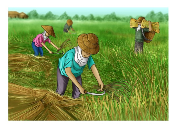 Planting Rice 4